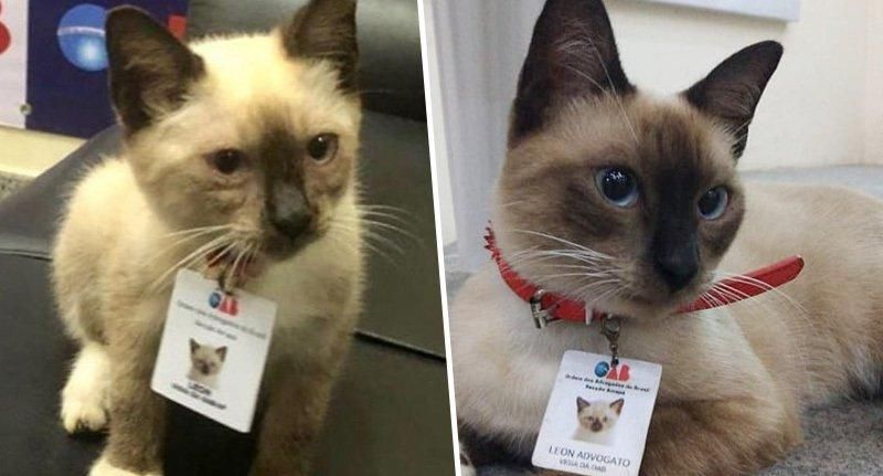 Law Firm Hires Stray Cat After People Complained About It Wandering Around The Office Stray Cat Hugs And Cuddles Cats