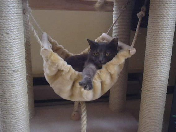 plete cat gym with cat hammock  plete cat gym with cat hammock   pets   pinterest   tango      rh   pinterest
