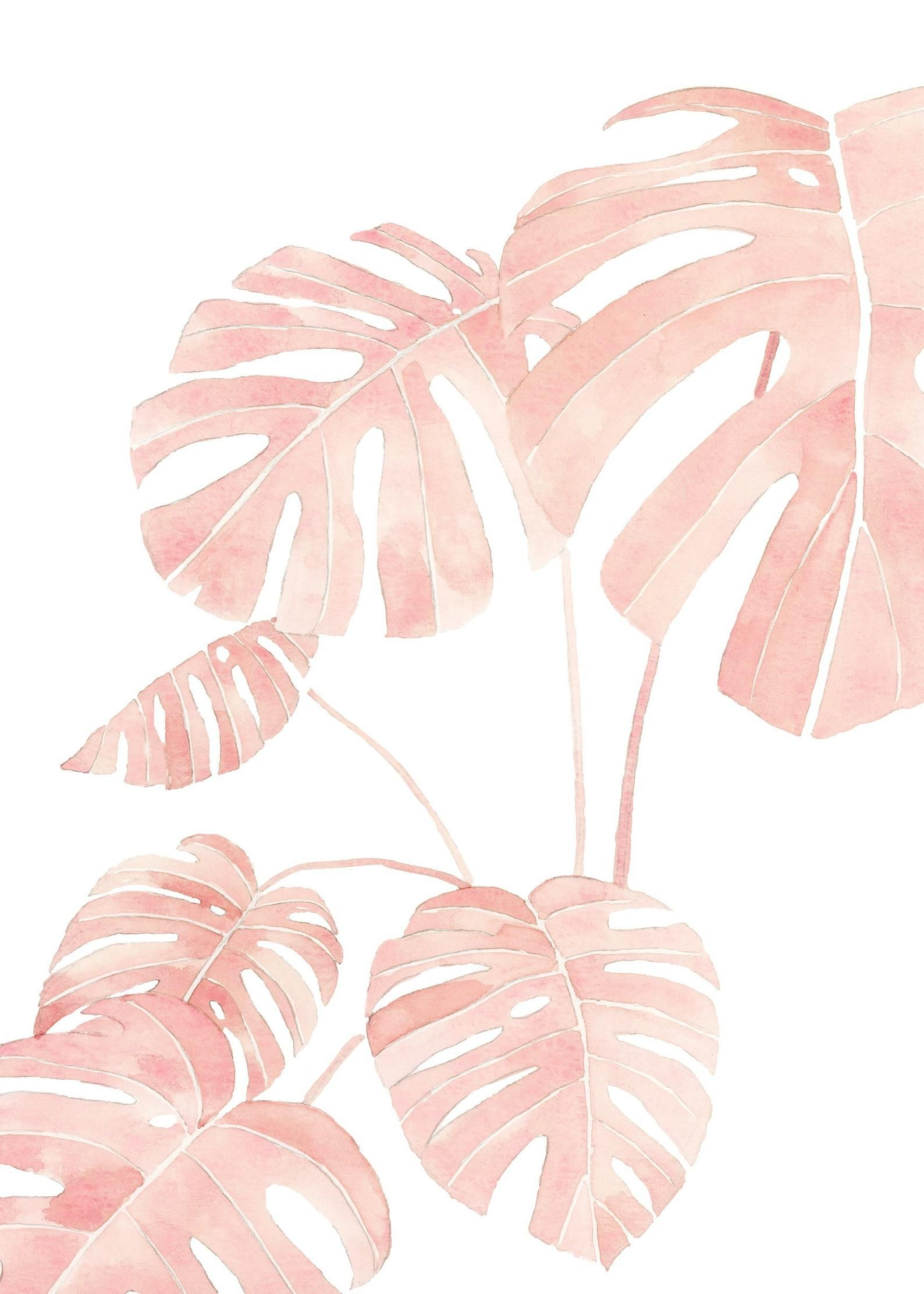 Monstera Plant Watercolor Art | Abstract | Pink