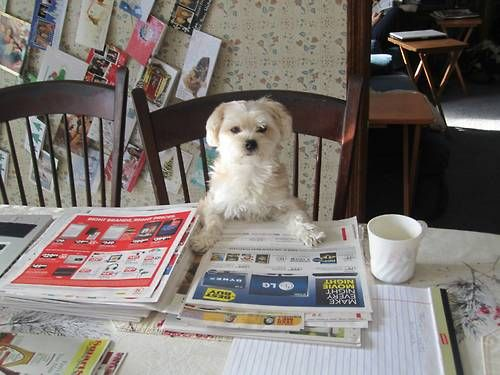 Dog Demands Funnies Section