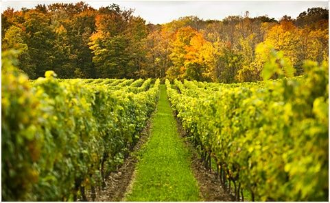 Woodinvale wine country places-to-visit-in-the-pnw
