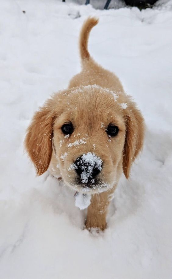 7 Dangerous Myths About Dogs And Winter That We Ne