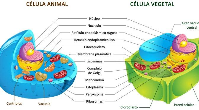 17 Ideas De Célula Biología Biología Biología Celular Eucariota