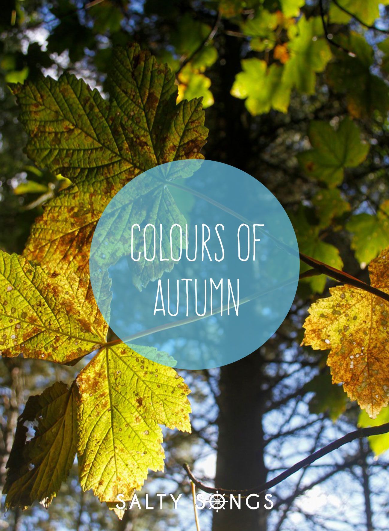 The Wonderful Colours of Autumn
