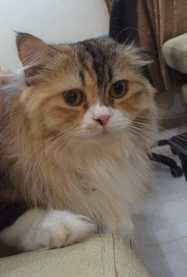 جميلة حمصية قطط سوريا A Pretty From Homs Syria Cats Cats Animals Syria