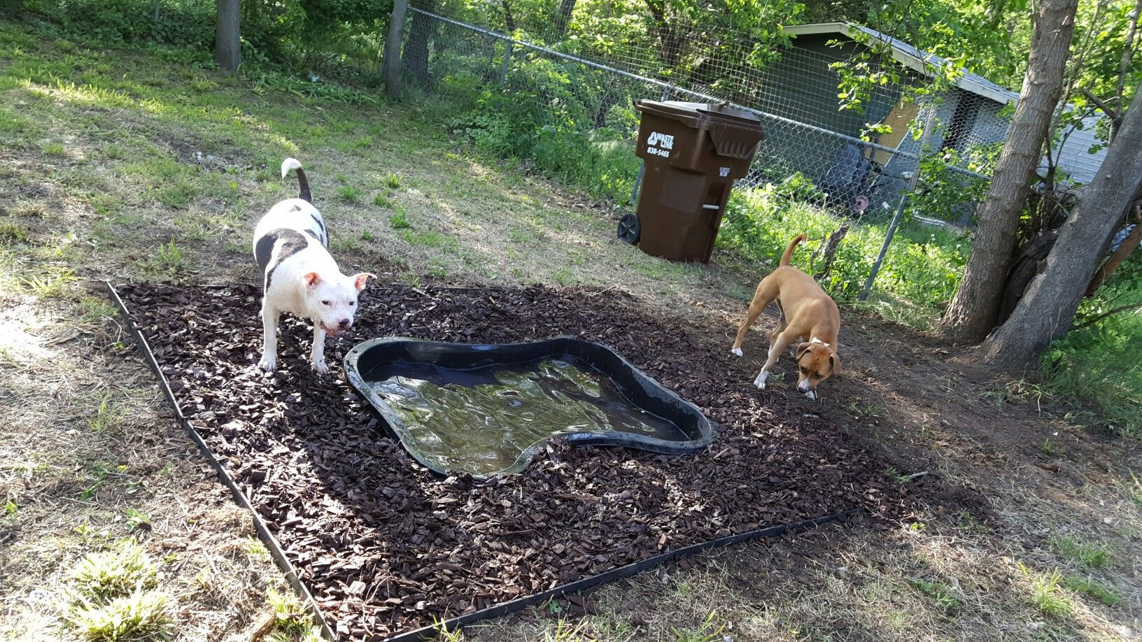 Dug a hole with a 3ft deep 6ft long koy pond for a doggie