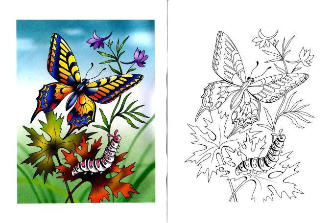 Swallowtail Butterfly and Caterpillar
