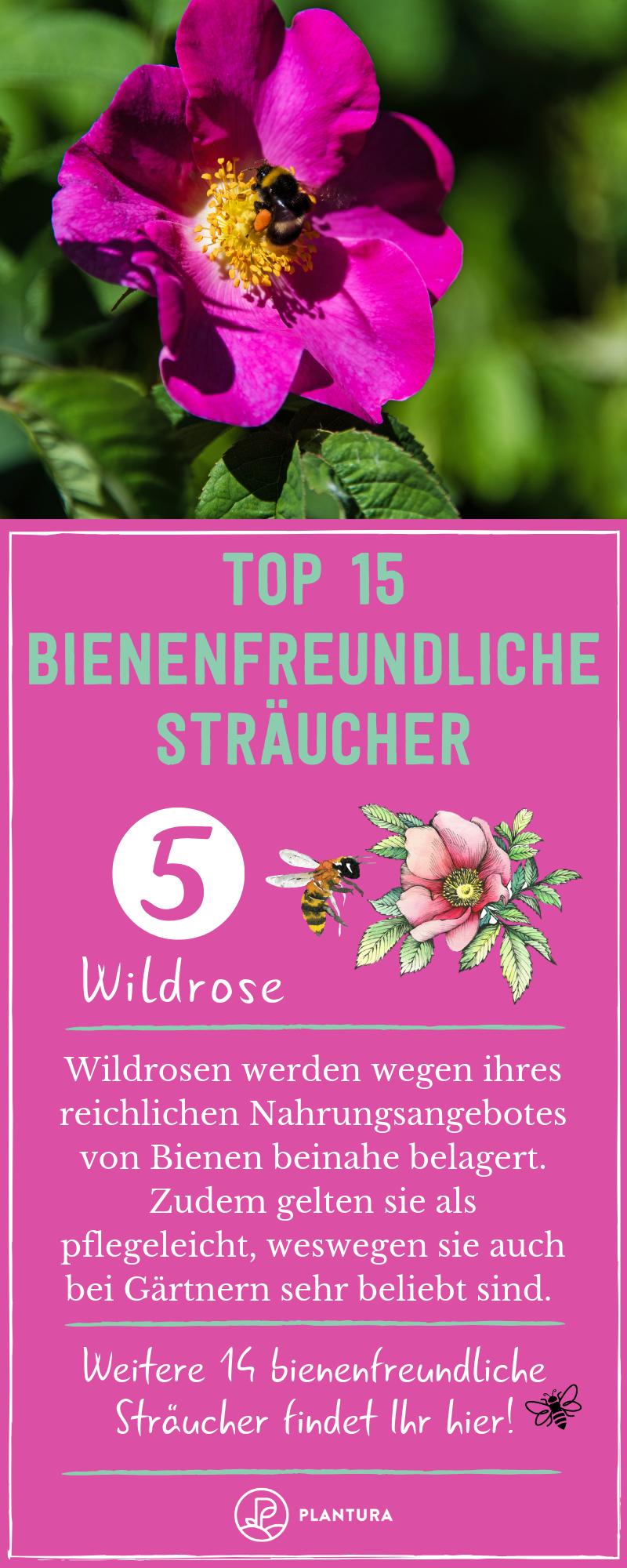 Top 15 Bienenfreundliche Straucher Wildrose Wildrosen Sehen Im Garten Oder A Bienenfreundliche Straucher Bienenfreundliche Pflanzen Bienenfreundliche Blumen
