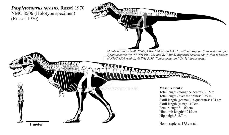 Allosaurus fragilis vs Daspletosaurus torosus   The World ...