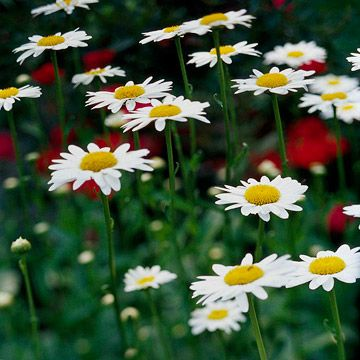 8 Easy Perennials for the Pacific Northwest | Gardening