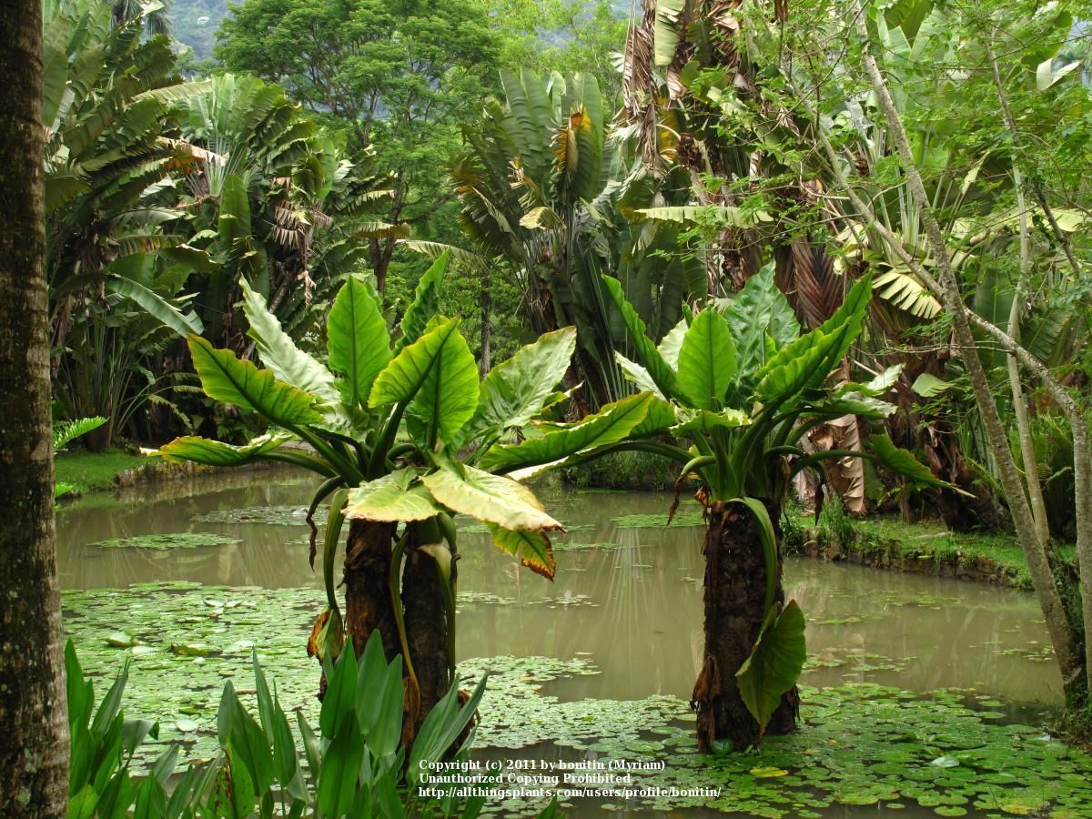tropical plants pictures and names plant id forum