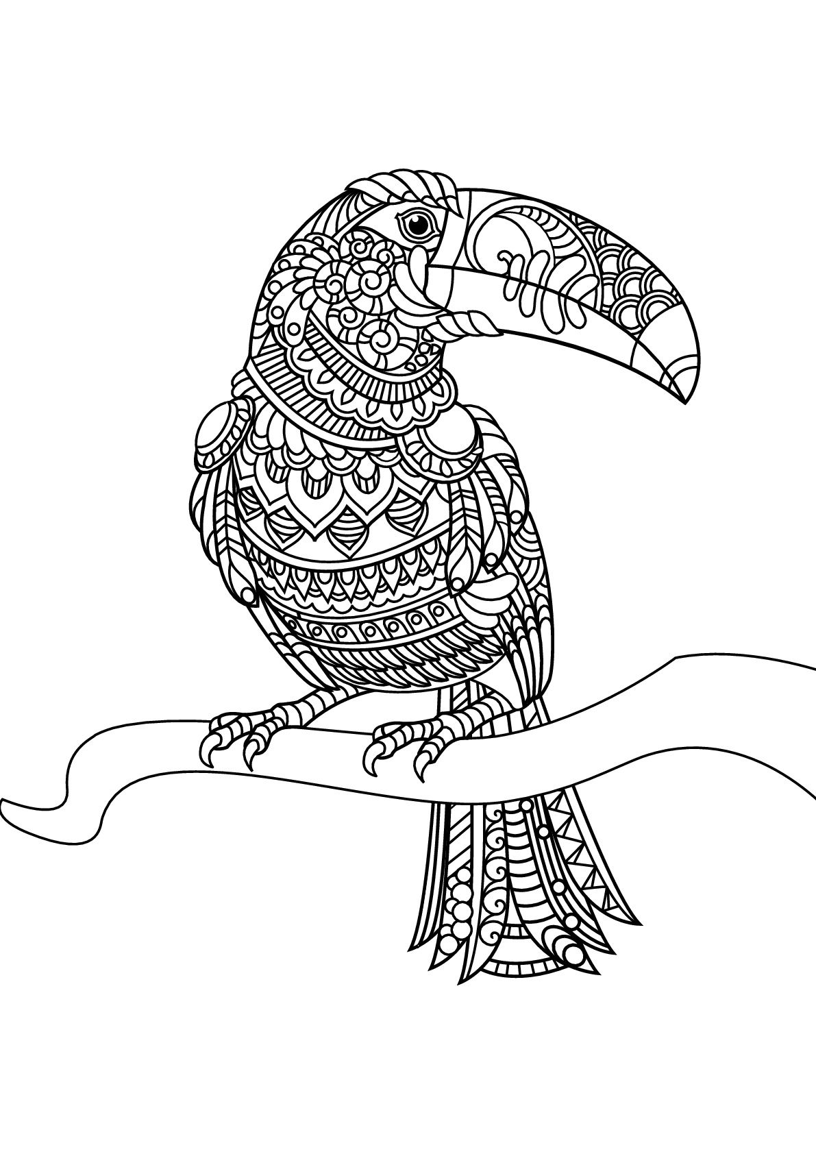 Free book toucan Birds Adult Coloring Pages Coloriage
