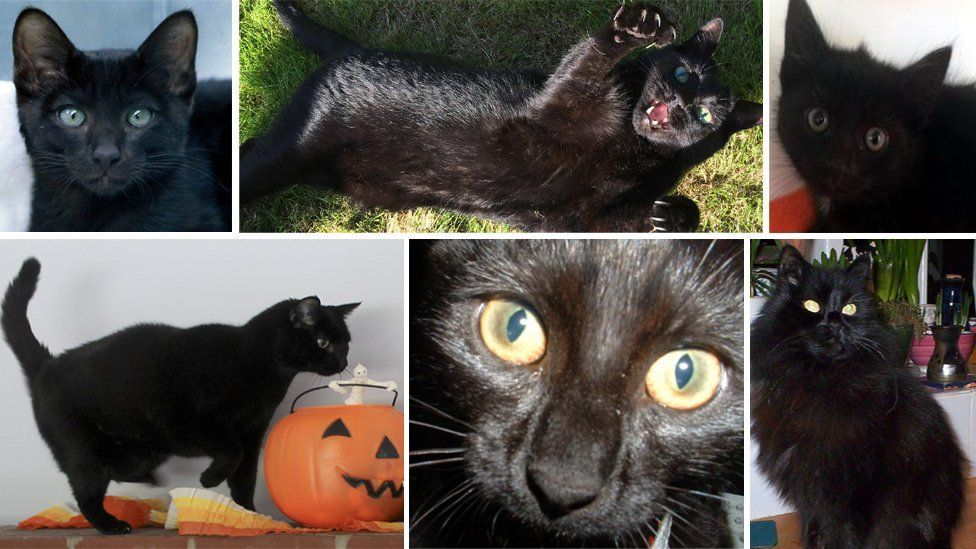 Black Cats Beauty Is More Than Fur Deep Black Cat Appreciation Day Black Cat Day National Black Cat Day