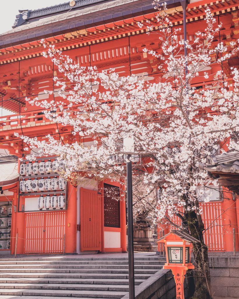 The Best Cherry Blossom Locations in Kyoto - Charlies Wanderings
