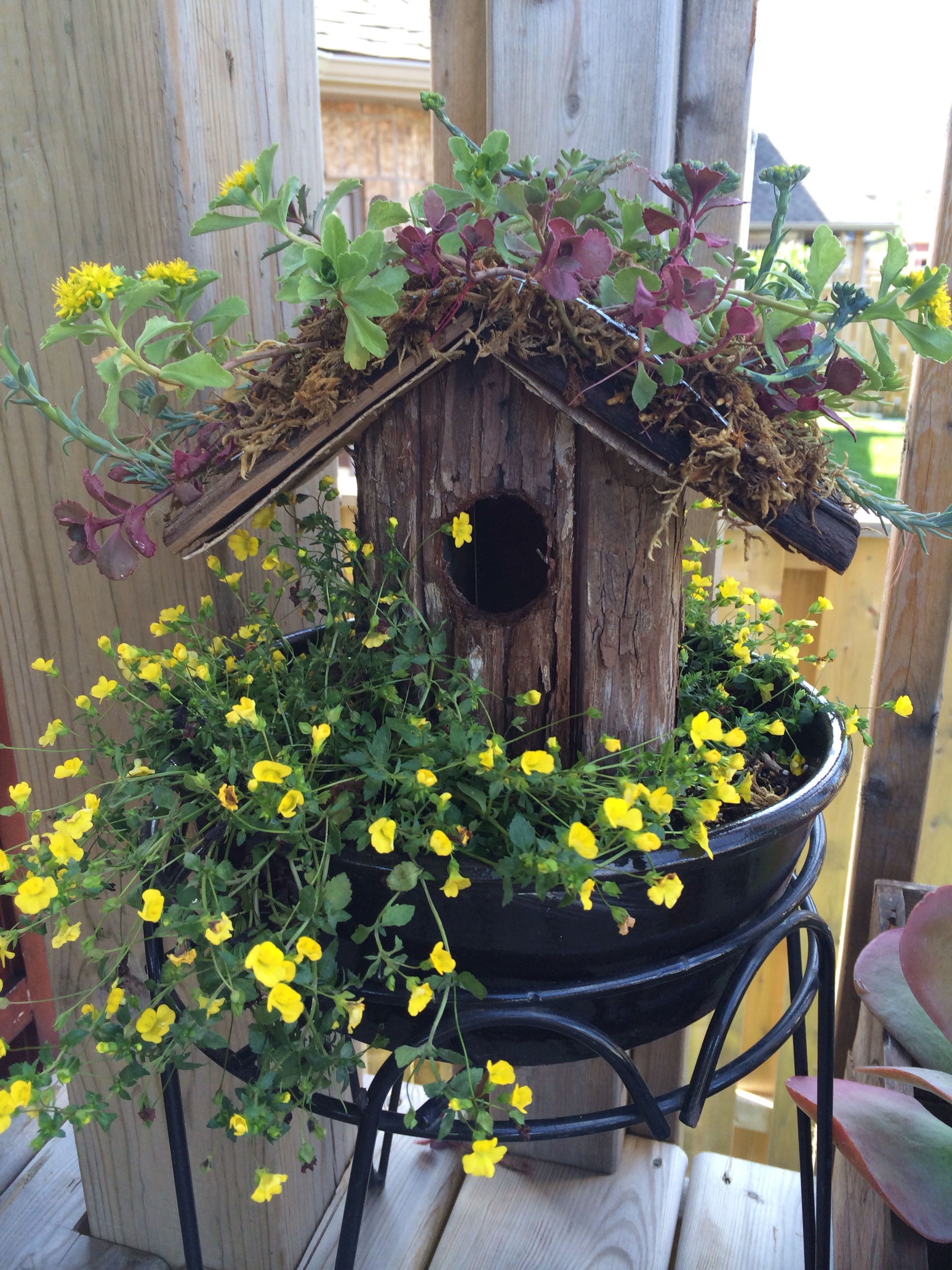 My Little Birdhouse Covered In Succulents