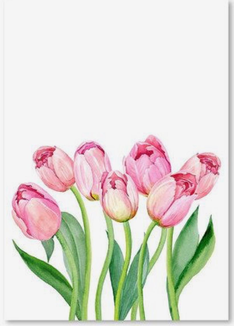 Pin By Dani Peck On Tulip Paintings Watercolor Tulips Tulip