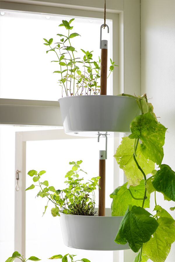 bittergurka hanging planter white balkong v xter och k k. Black Bedroom Furniture Sets. Home Design Ideas