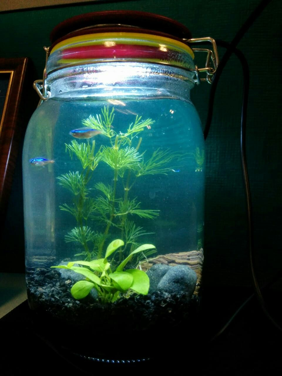 Mason jar aquarium aquarium pinterest aquariums and jar