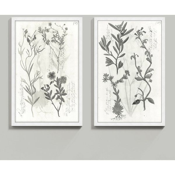 Ballard Designs Piedmont Botanicals Art 50  x 32  (£235) ? liked on Polyvore featuring home home decor wall art ballard designs grey and white wall art ...  sc 1 st  Pinterest & Ballard Designs Piedmont Botanicals Art 50