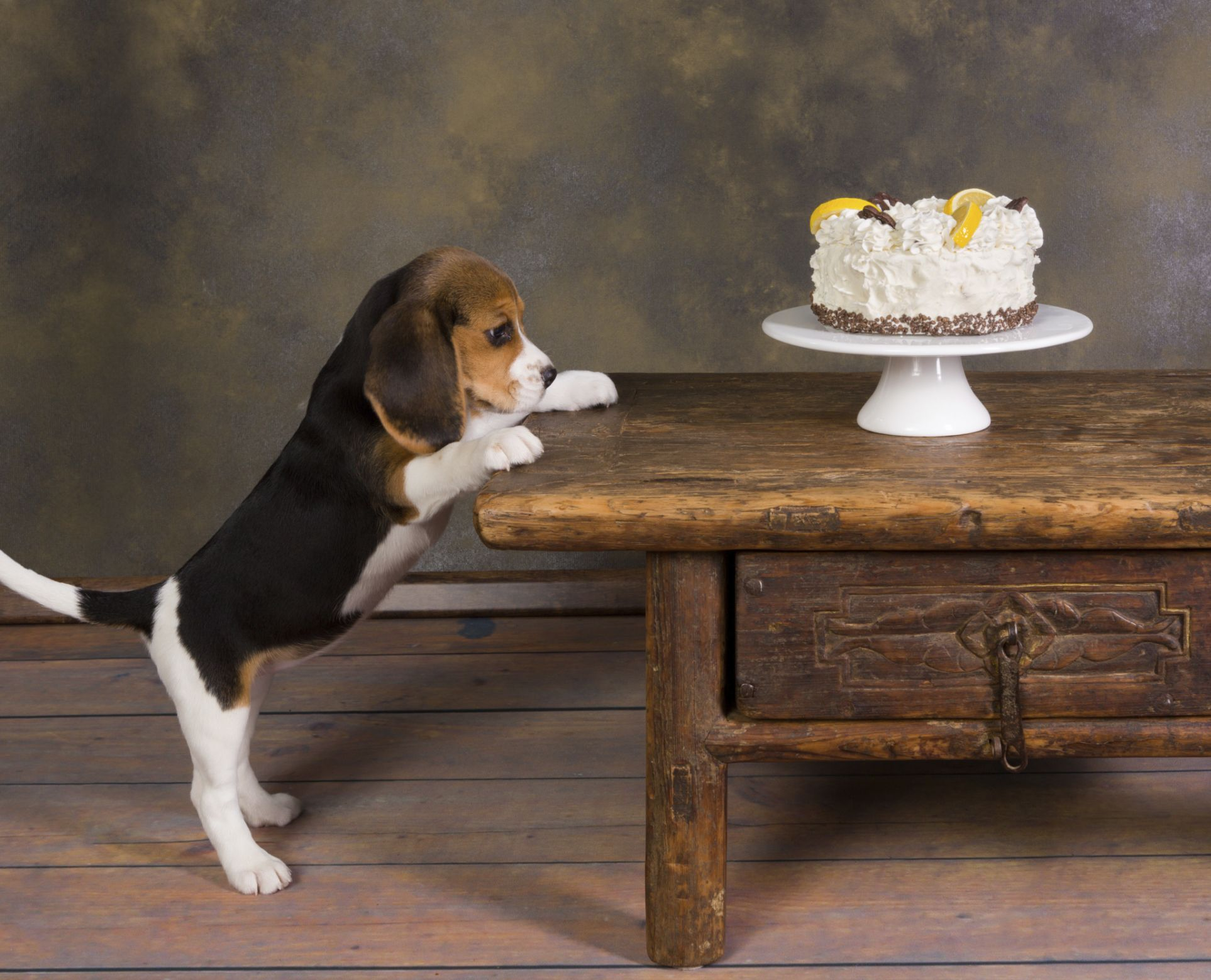 3 Sugar Free Treats For Your Dog Beagle Puppy Dogs Puppies Beagle