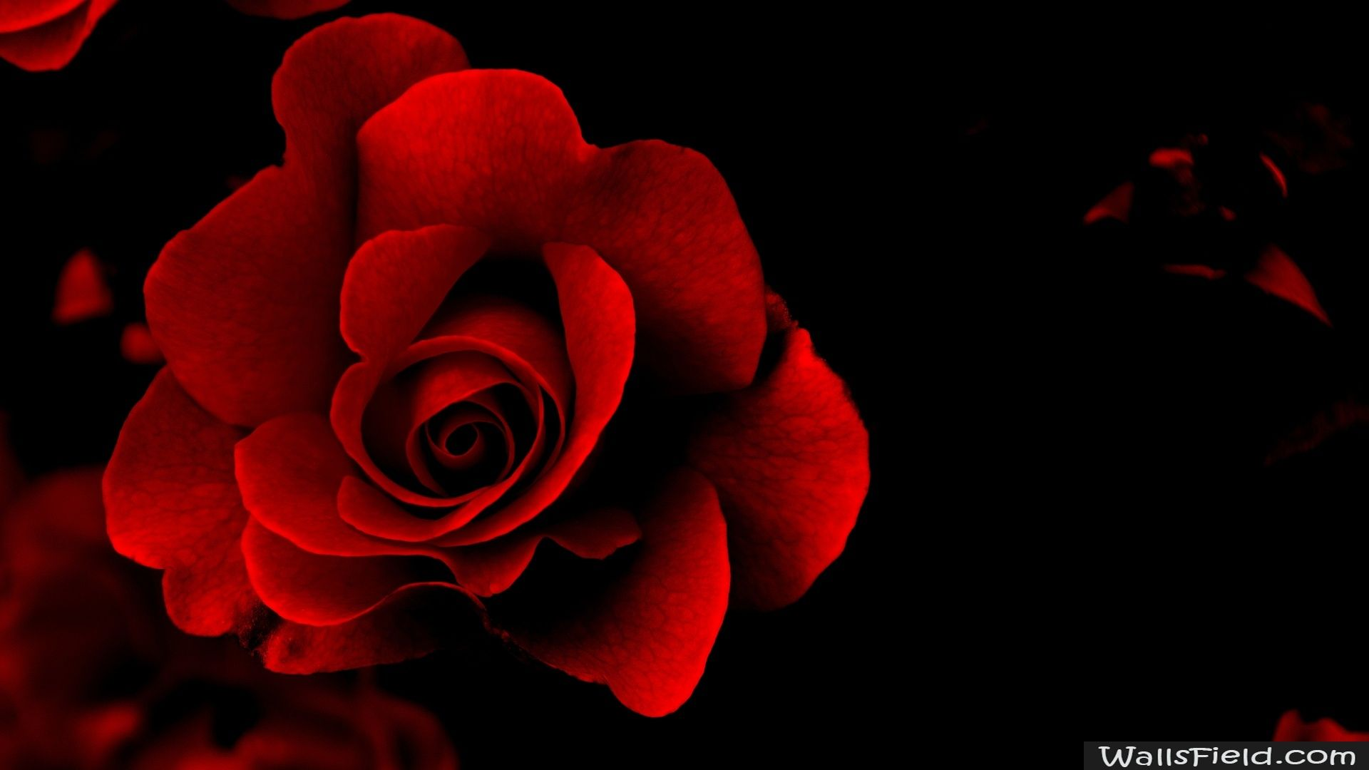 1920 X Red Rose Flower Desktop In Wallpaper Collections HD Wallpapers