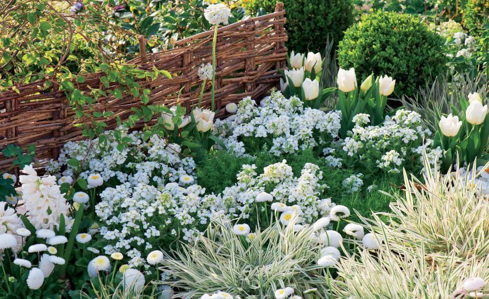 Silberlaubige Pflanzen Garten Topfpflanze ? Blessfest.info Pflanzen Garten Im Winter