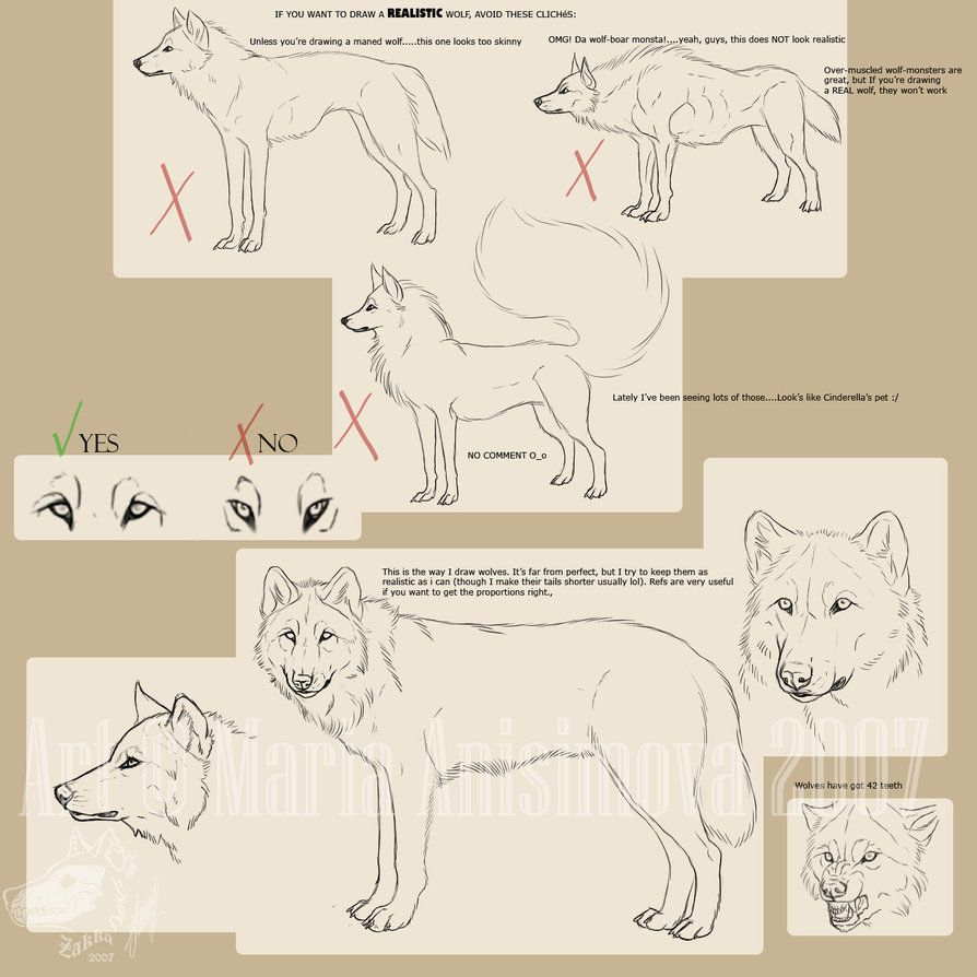 Drawing realistic wolves... by ~Yellow-eyes on deviantART | Anatomy ...