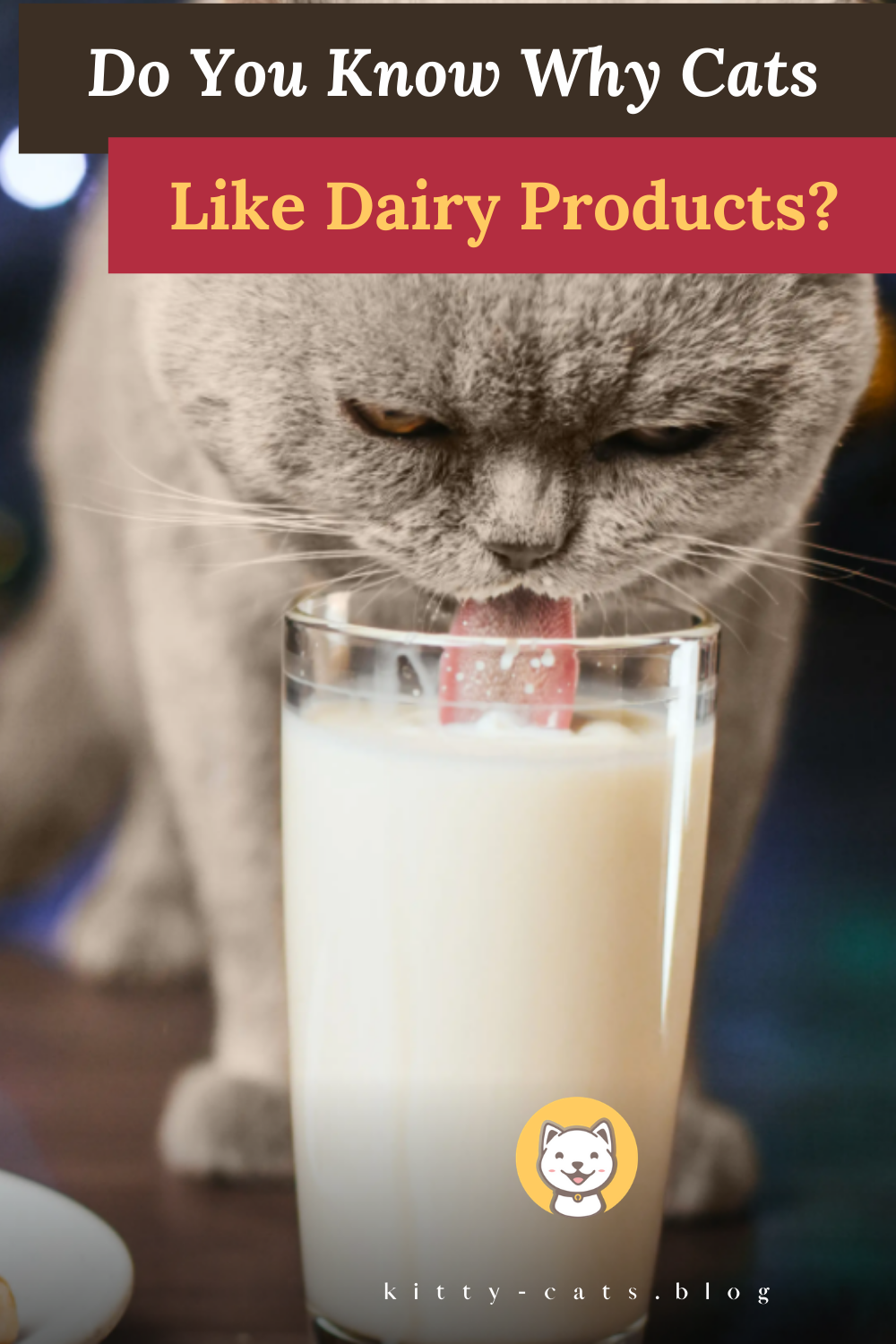 Do You Know Why Cats Like Dairy Products Kitty Cats Blog In 2020 Cat Health Care Cat Nutrition Animal Nutrition
