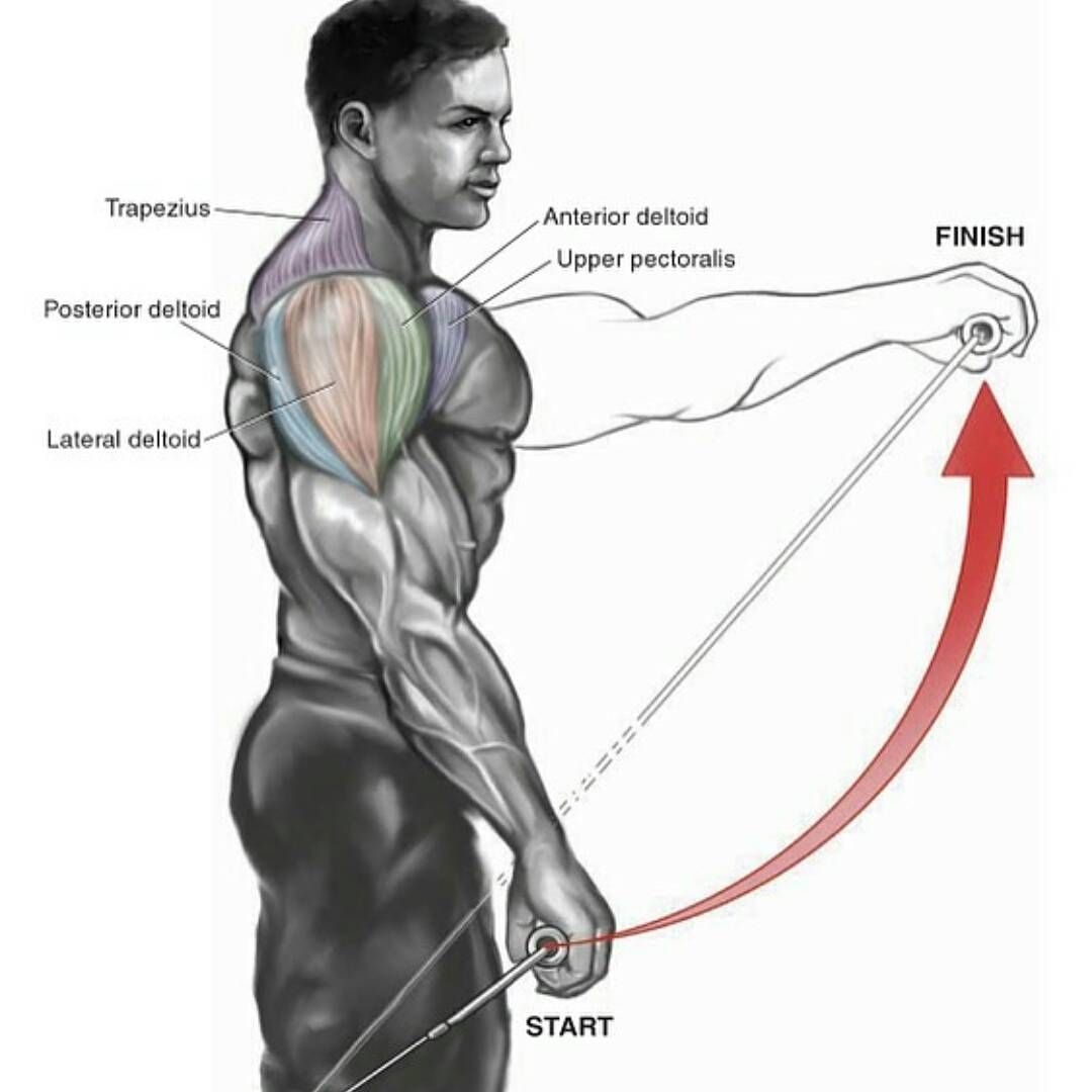 shoulders #workout #gymlegends | Other Geniuses | Pinterest | Muskel ...