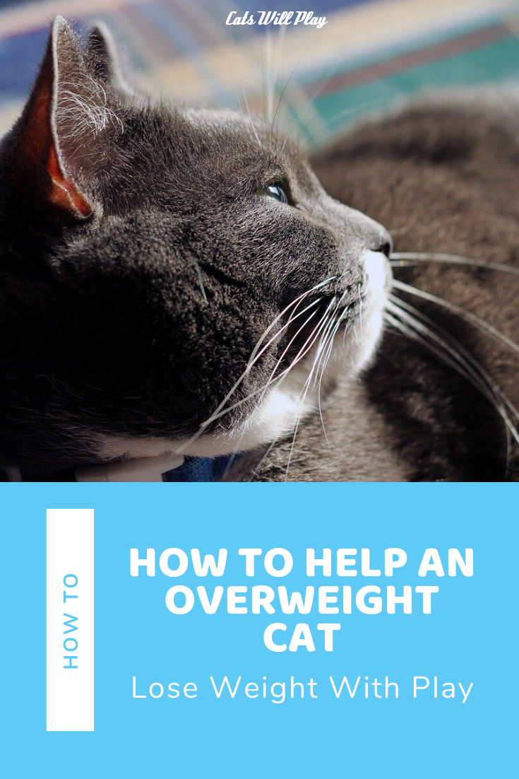 f61739263517310258980e295d8b864b - How To Get My House Cat To Lose Weight