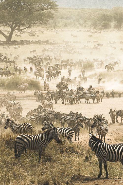 Pin Von Bond Safris Auf Bond Tours And Travel Limited Afrika