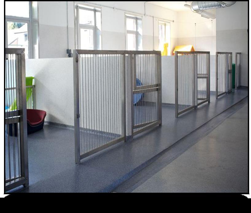 veterinary hospital decor Google Search Shelter dogs
