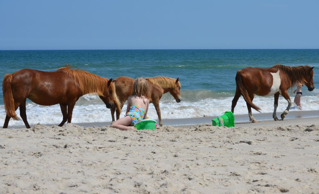 Beach Bum Ocean City Md