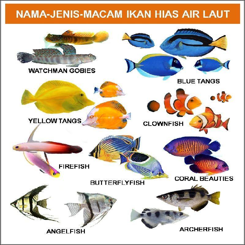 Nama Latin Ikan Air Tawar Dan Ikan Air Laut Ikan Air Tawar Ikan Air Tawar