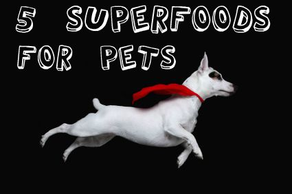 The Fab Five Five Superfoods To Feed Your Pet Pet Health Tips