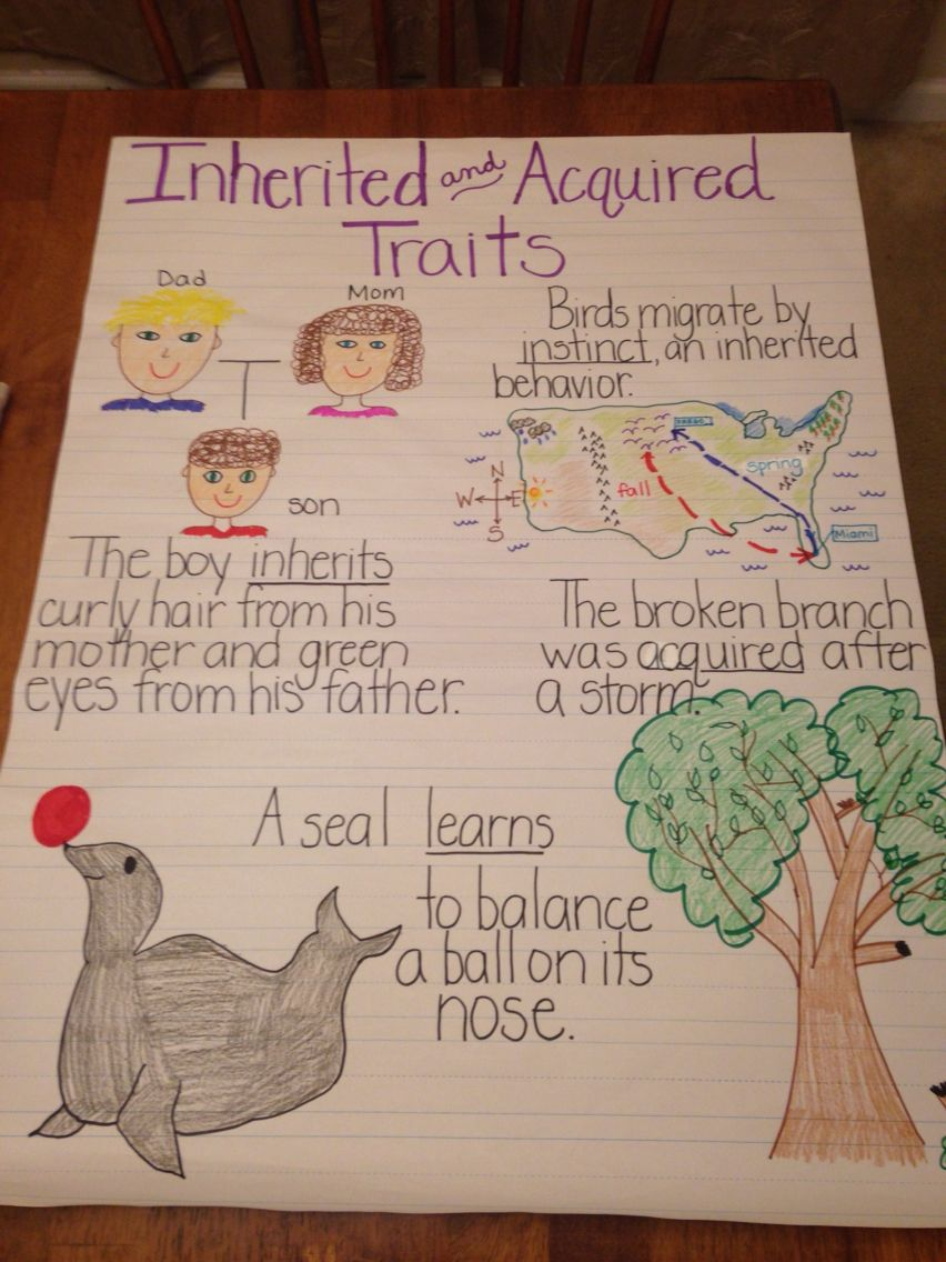 Inherited And Acquired Traits Anchor Chart I Like The Use Of Different Vocabulary Terms Science Anchor Charts Third Grade Science Life Science