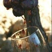 AGENDA Del Consejo Regulador de Órigen La Rioja