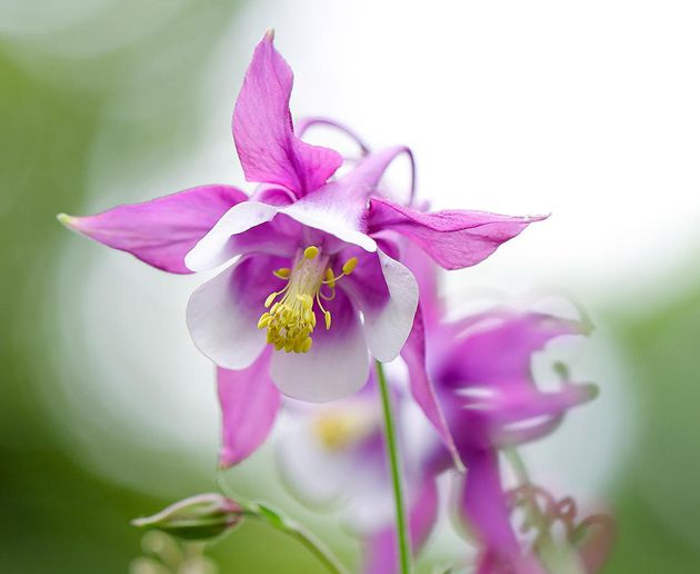 25 Most Beautiful flowers in the world   Great Inspire   Flower ...