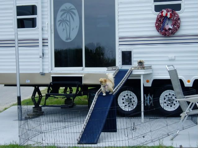 Rv Dog Door Bahaha Let S Get Dad To Install This Lol