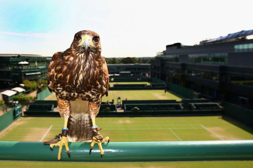 Stephen Hawking Tennis rules, Tennis clubs, Tennis equipment