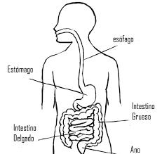 Resultado De Imagen Para Aparato Digestivo Para Niños