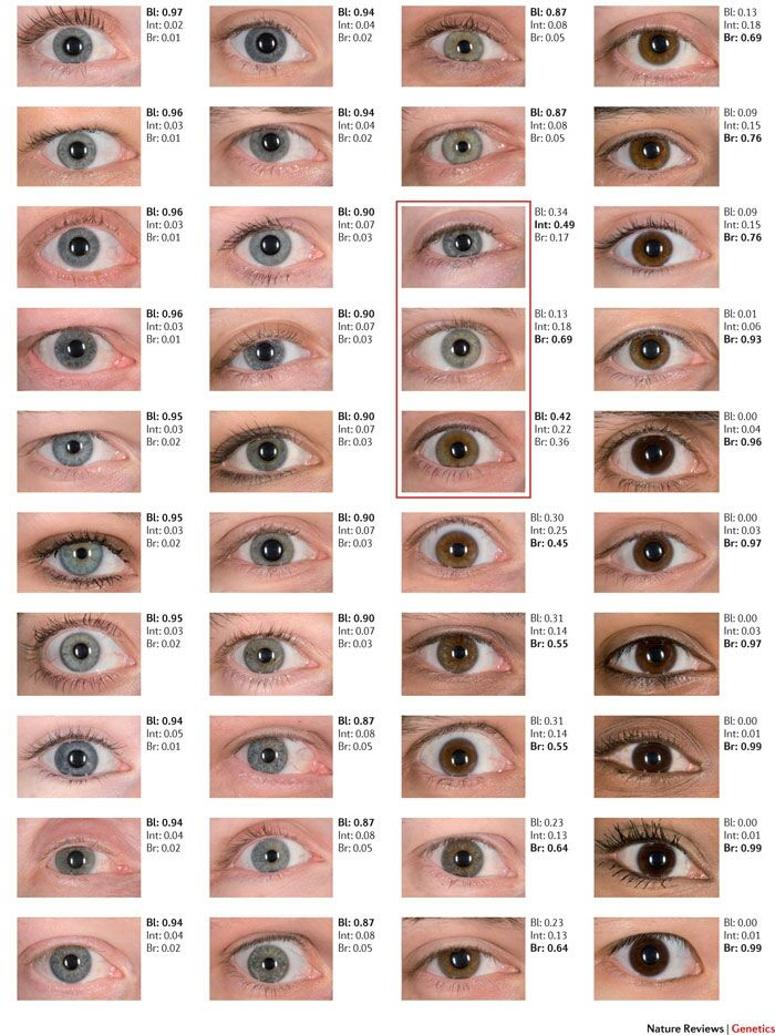 Of 40 different blue eye colors, only the three colors in the red box  couldnt be determined by IrisPlex DNA-based eye color detection system.