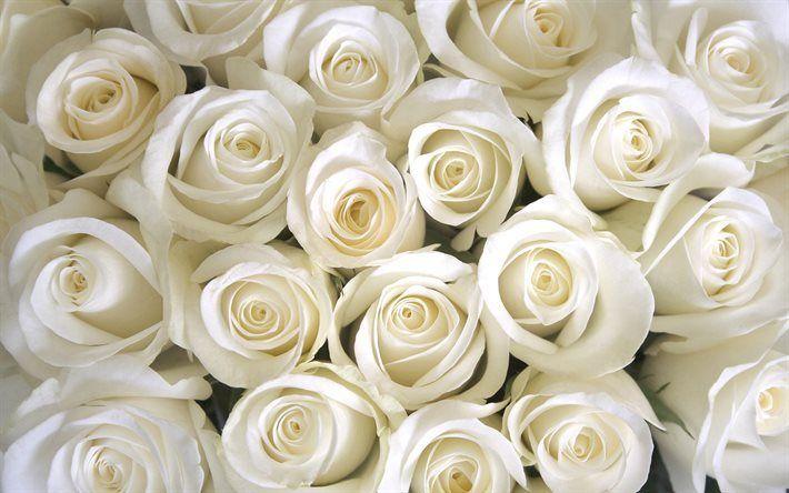 Préférence Télécharger fonds d'écran Des roses blanches, bouquet de roses, de  KJ41