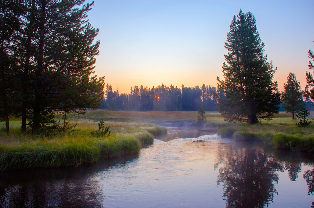 The morning after we had stayed in a cabin at Canyon Lodge, it was terribly cold (not just outside but also within the cabin), so wafts of mist were lying over this creek near Norris Geyser Basin.