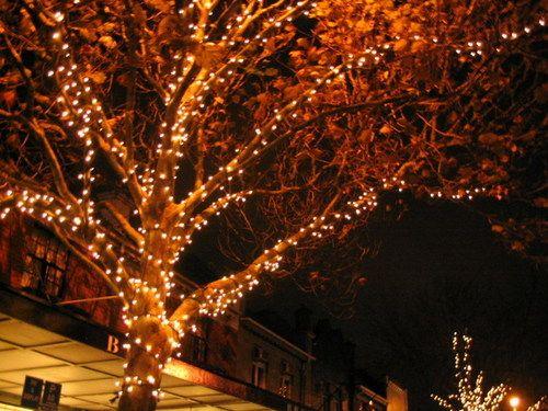 Solar fairy lights & Solar Lights: the good the bad and the very pretty | Pinterest ...