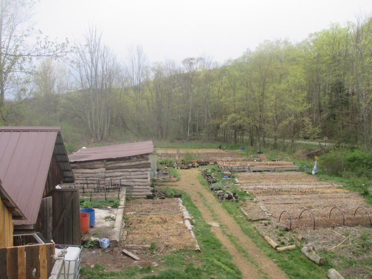 nursery above view.jpg Twisted tree, Trees to plant