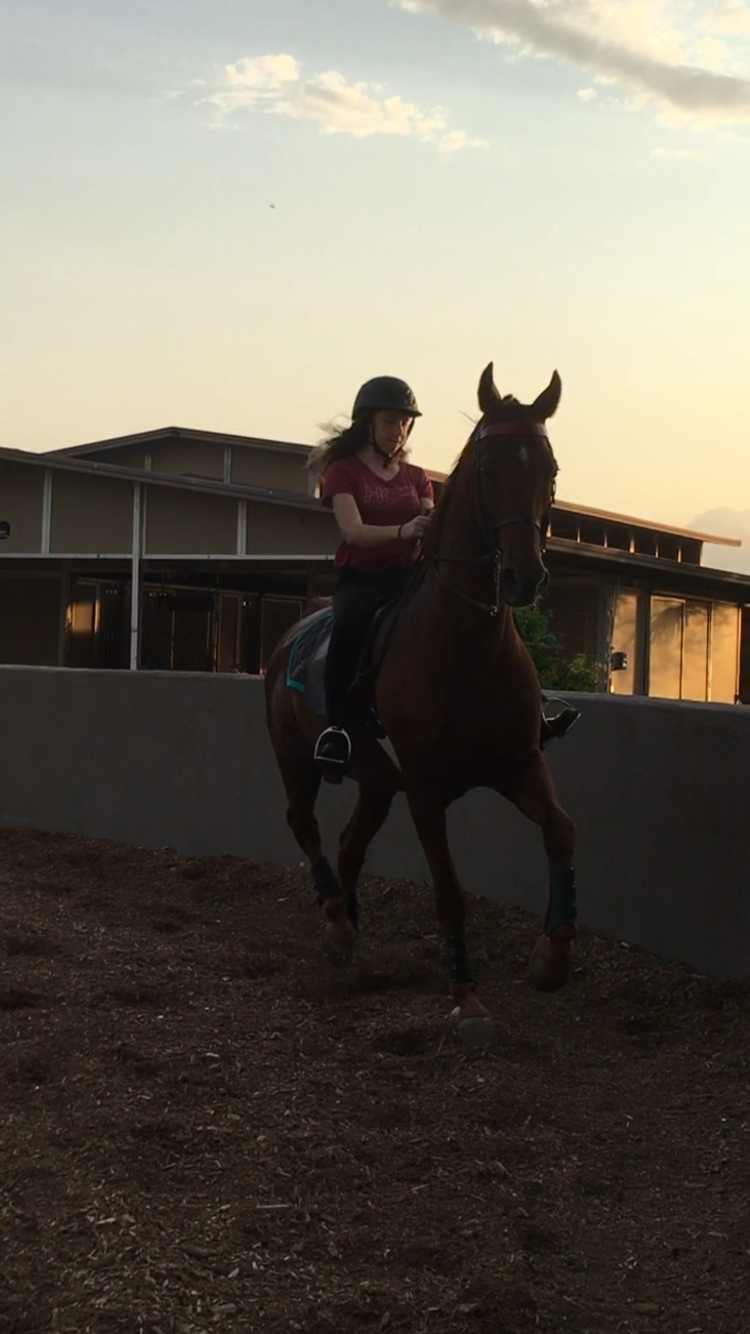 Pin on Saddleseat & Saddlebreds ️