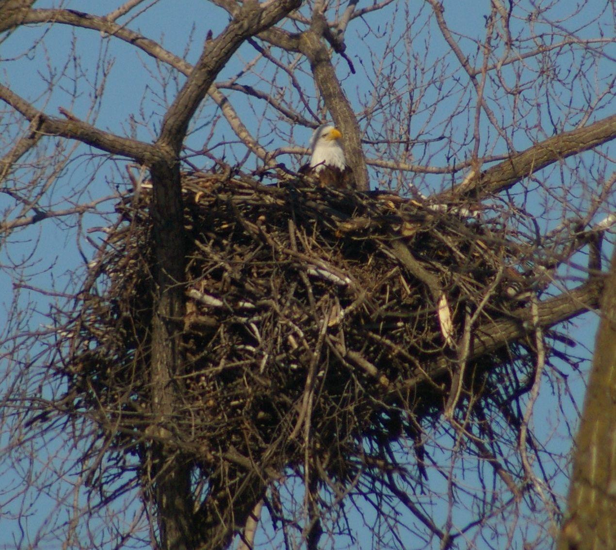 Eagles Nest Eagle Nest Eagle Nest Cam