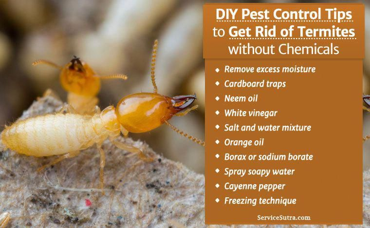 Get rid of termites without chemicals diy pest control
