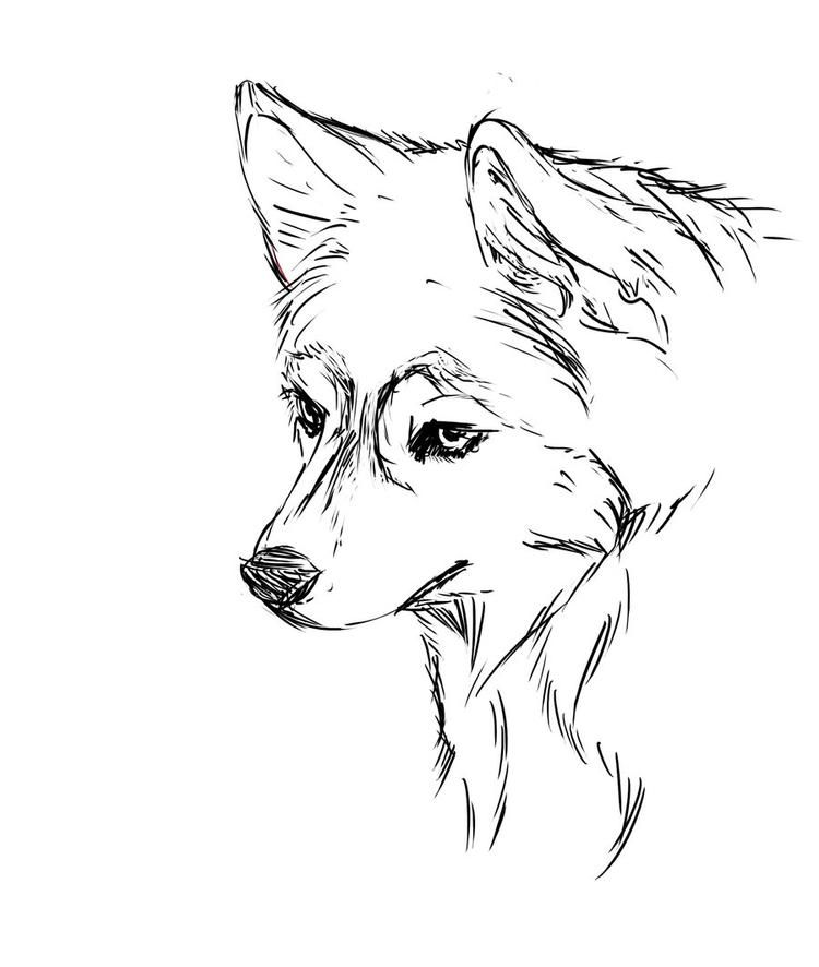 Face Realistic Husky Coloring Pages | Puppy coloring pages ...